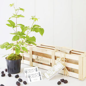 Grow Your Own Blackberry Jam Gift Set - food gifts