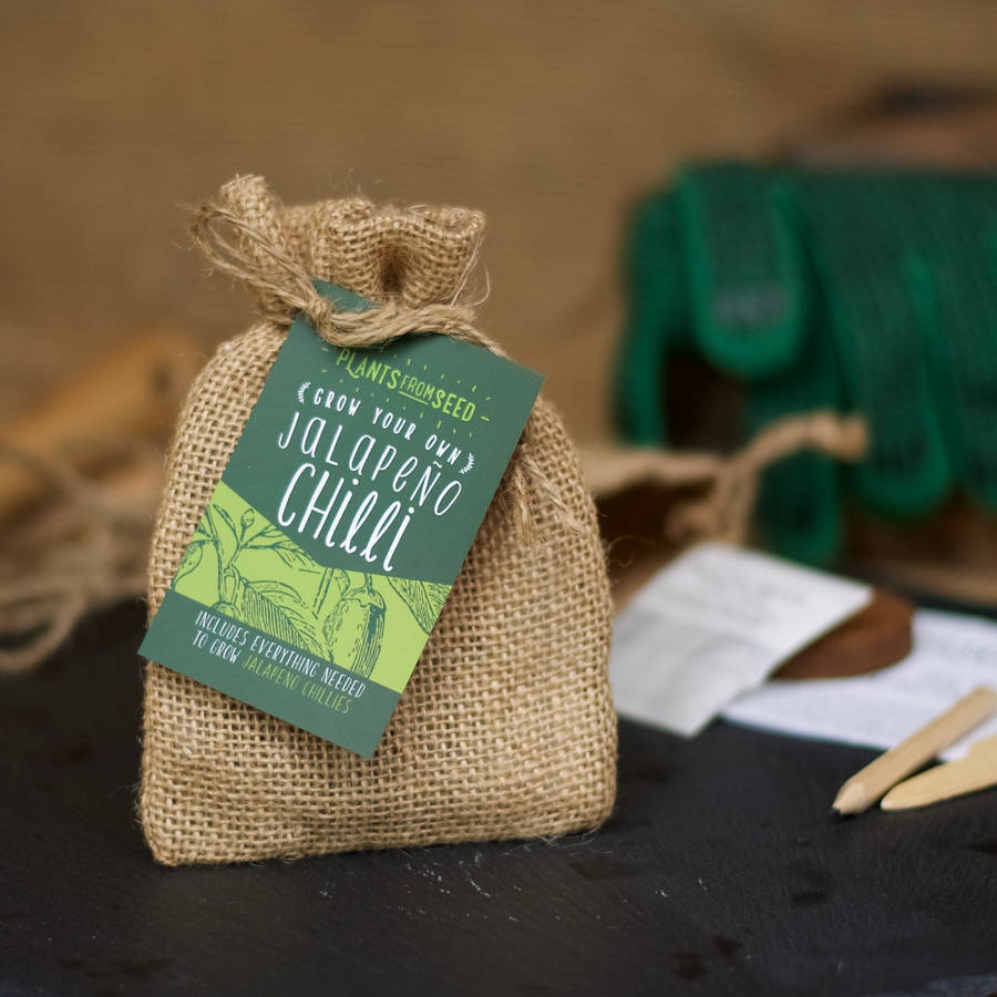 Grow Your Own Christmas Tree Mini Plant Kit By Plants From ...