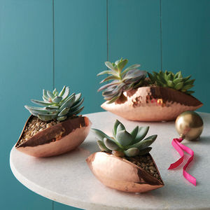 Copper Seedpod Plant Holders - house plants