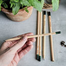 Set Of Five Sprout Herb Growing Pencils