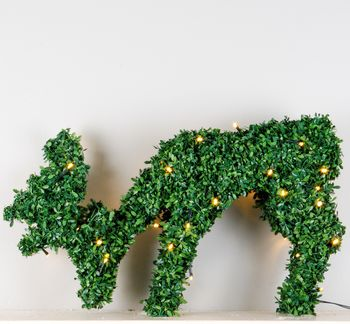 Topiary Deer With LED Lights