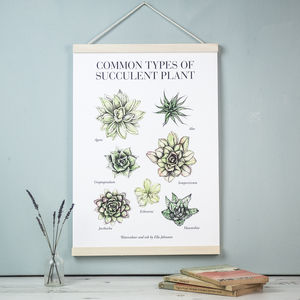 Illustrated Succulents Botanical A3 Art Print