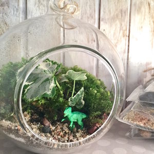 Trex Diy Terraium Kit - terrariums