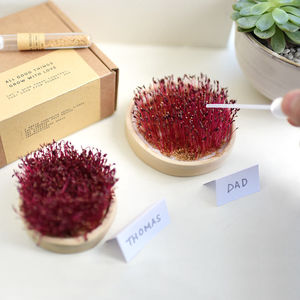'All Good Things Grow With Love' Microgreen Growing Set - gardener