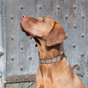 Balmoral Check Tweed Dog Collar And Tan Lead - dogs