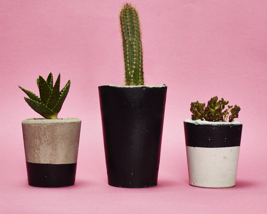 concrete plant pot with cactus or succulent in black by hi cacti ...