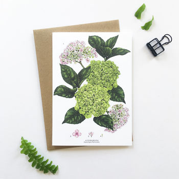 Botanical Hydrangea Greeting Card