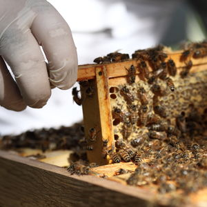 Urban Beekeeping And Craft Beer Experience 2017 Season - gifts for him