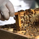 Urban Beekeeping And Craft Beer For One Experience 2020