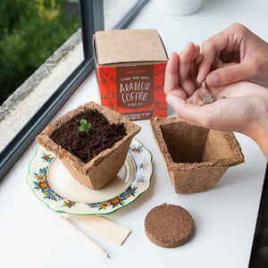 Grow Your Own Coffee And Tea Plant Kit Selection - coffee lover