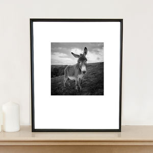 Barnaby The Donkey, Art Print - animals & wildlife