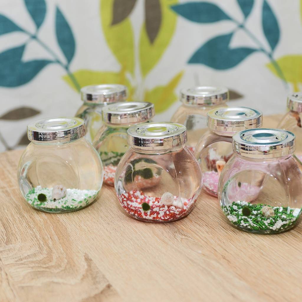 Marimo Moss Ball Terrarium By Dingading Terrariums