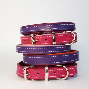 Padded Leather Dog Collar - dogs