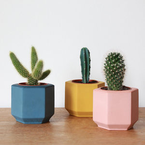 Coloured Hexagonal Planter - colour pop