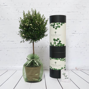 Myrtle Tree Of Love Gift
