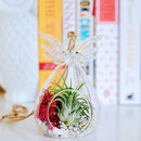 Hanging Glass Angel Air Plant Terrarium