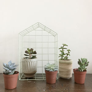 Mini Succulent Selection - new in