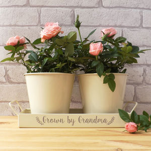 Personalised Tray And Pots - gardening