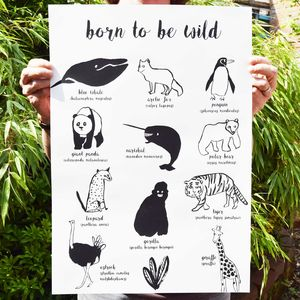 'Born To Be Wild' Illustrated Animal Poster - baby's room