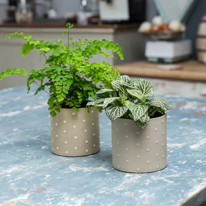 Spotted Ceramic Planter Plant Pot
