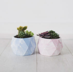 Geometric Marbled Pastel Planters With Succulents - flowers, plants & vases