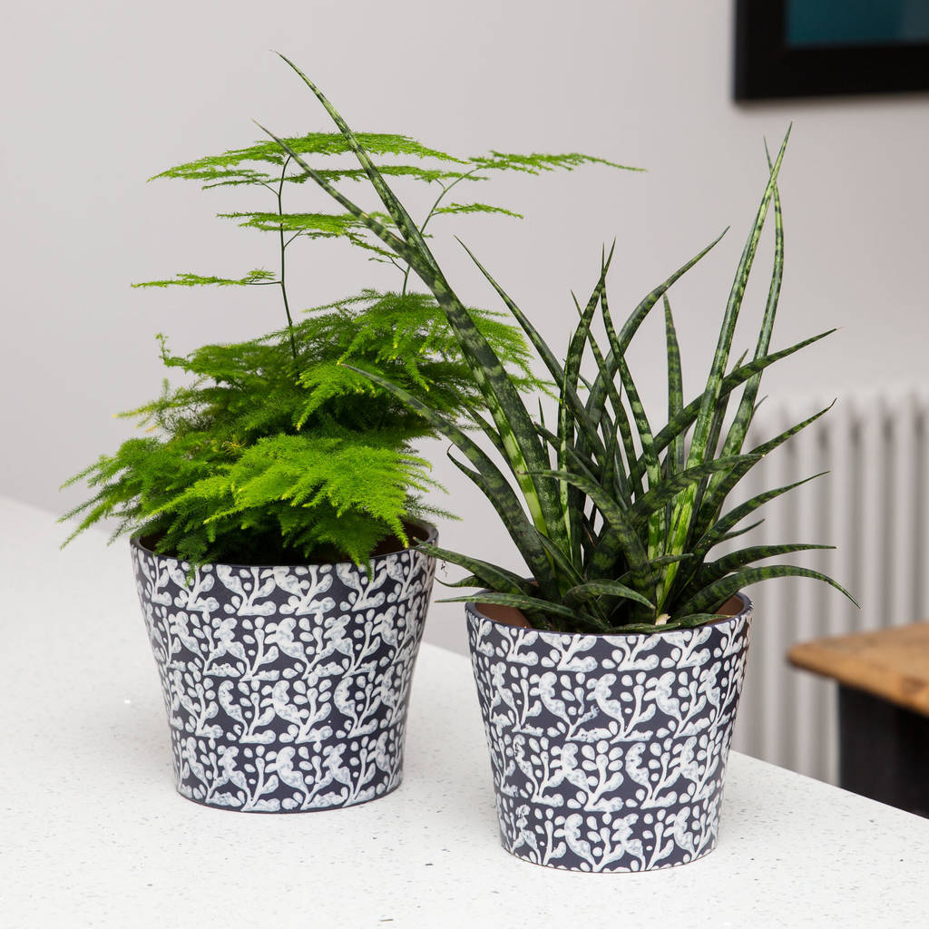 Inky Blue Printed Indoor Planter By Stupid Egg Interiors