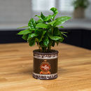 Coffee Plant With Vintage Style Ceramic Coffee Planter