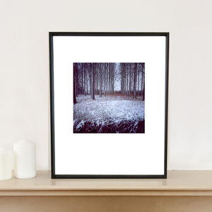 A Winter Woodland, Suffolk, Signed Art Print - photography & portraits