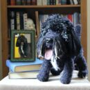Personalised Crocheted Cuddly Toy Of Your Dog