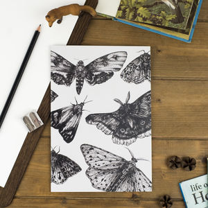 Lined Moth Print Notebook