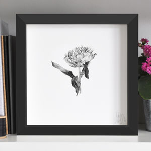 Peony Flower Print - drawings & illustrations