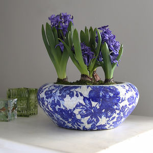Blue Botanical Planter With Hyacinth Bulbs