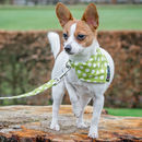 Apple Green Polka Dot Dog Collar