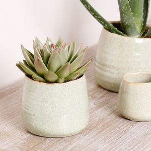 Potter's Wheel Green Ceramic Plant Pots
