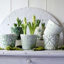 Green Patterned Plant Pot With Bulbs