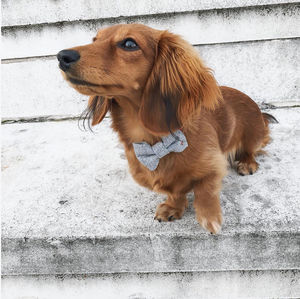 Cambridge Wool Dog Bowtie - dogs