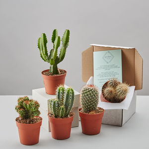 Cacti Selection Box - flowers, plants & vases