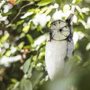 White Owl Handmade Recycled Metal Garden Ornament