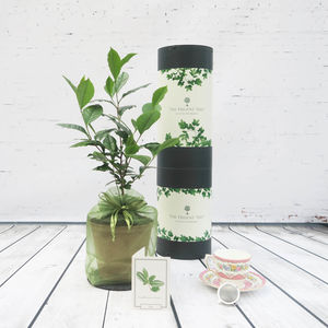 Tea Plant Gift Set - 60th birthday gifts
