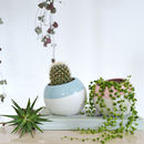 Ceramic Plant Pot With Powder Blue Or Rose Detail