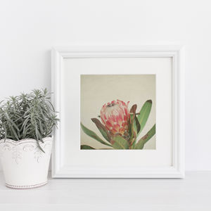 Pink Ice Botanical Photographic Print - photography & portraits
