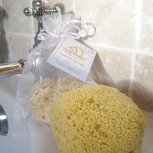 Natural Sea Sponge - bathroom
