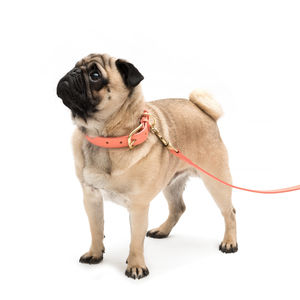 Coral Leather And Brass Dog Collar And Lead - pet leads & harnesses