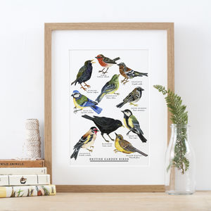 British Garden Birds Illustrated Giclée Print
