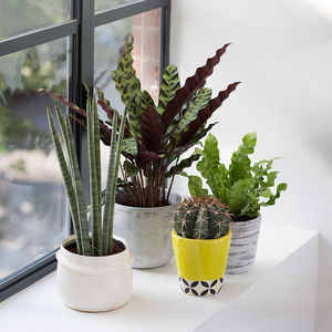 Indoor Plant Year Subscription - 50th birthday gifts