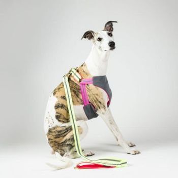 Grey and Pink Dog Harness