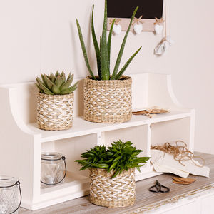 Set Of Three Natural Woven Seagrass Planters - pots & planters
