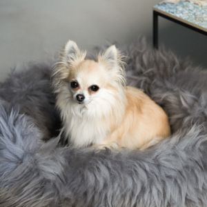 Grey Sheepskin Pet Bed