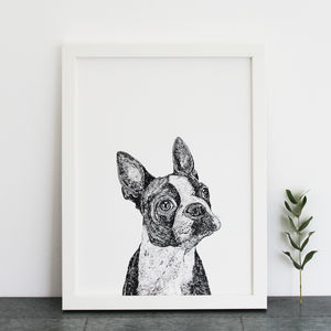 Boston Terrier Print - pet portraits