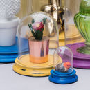 Glass Dome Bell Jar With Coloured Base